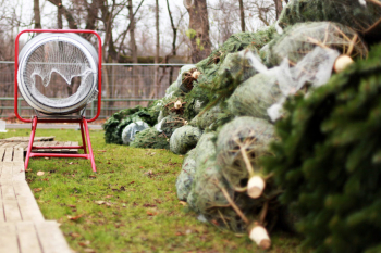 Ab dem kommenden Freitag werden in der Rostocker Heide wieder Weihnachtsbäume verkauft.