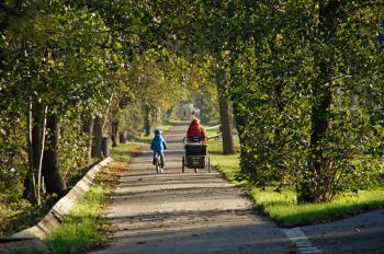 Die Stadtverwaltung lenkt ein und hat die geplanten Baumfällungen in der Warnemünder Parkstraße zur weiteren Variantenprüfung auf unbestimmte Zeit ausgesetzt.
