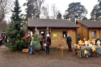 Am Nikolaustag beginnt in der Rostocker Heide der traditionelle Weihnachtsbaumverkauf.