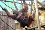 Tierwelten entdecken im Zoo Rostock mit Darwineum