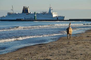 Hunde am Warnemünder Strand