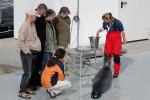 Die Robbenforschungsstation auf der Warnemünder Ostmole