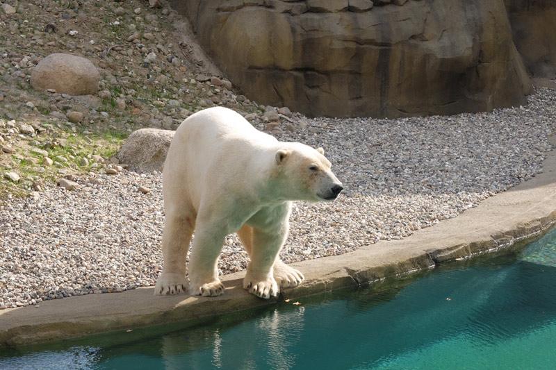 Das Polarium im Rostocker Zoo
